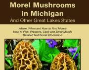 Morel Mushrooms in Michigan