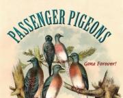 Passenger Pigeons Gone Forever