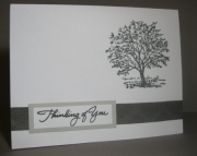 Serene Tree - Boxed Card Set of 10
