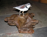 Piping Plover On Driftwood