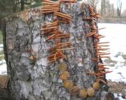 Golden Branch Coral/Jasper Necklace