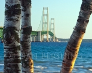 Mackinac Bridge Trees