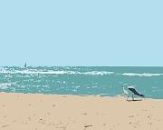 Bird Print of Seagull on Lake Michigan Beach 8x10