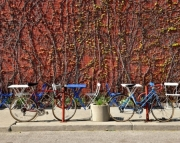 Urban Cafe Bikes, Blue and Red Bike Photography Print 8x10