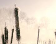 Frozen Life