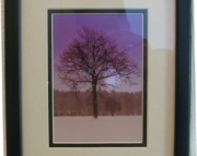 Framed Maple Tree Photo with Purple Background