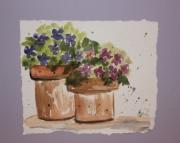 Potted Violets