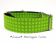 Dog Martingale Collar    Limon