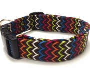 Dog Collar  Xavier