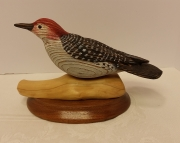 Redbreasted woodpecker