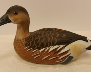 Fulvious Tree Duck