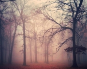 Warm Glow of Fog 8