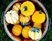 Farm Market Gourds