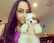 ckc lhasa apso puppy