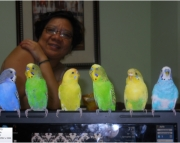 Great budgies
