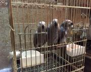 vet african greys (240 5 ) 83- 03 - 93