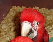 well trained and nurtured parrots (240 5 ) 83- 03 - 93