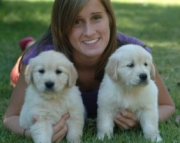 registered Golden Retriever puppies 971x231x5532