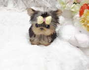 Absolute Cute Yorkshire Terrier puppies 505x652x7165