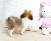 eff Teacup chihuahau puppies for sale