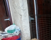 Home Raised Chow Chow puppies for sale 505x652x7165