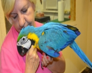 gorgeous litter of Macaw Parrots - ready