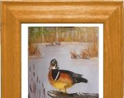 Wood Duck 1