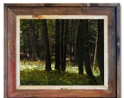 Canvas Print Mackinac Island Woods