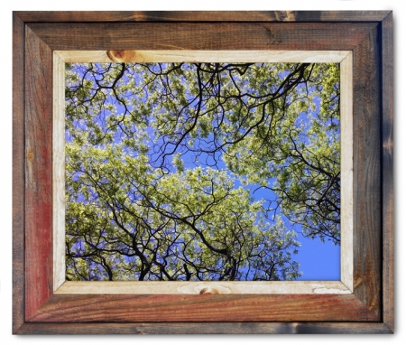 Canvas Print Tree Canopy