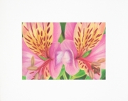5x7 matted art print for an 8x10 frame, Peruvian Lily, Flower