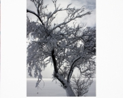 Cadillac Blizzard 2010 Tree 2, 5x7 Photo Matted for 8x10