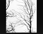 Lake Michigan Shore Line Art Tree at Little Sable Light House 8x10 Black & White photo