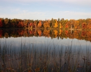 Fall Reflections #1