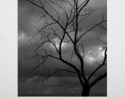 Lake Michigan Shore Line Contrast Tree at Little Sable Light House 8x10 Black & White photo