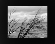 Lake Michigan Shore Line Trees 2 at Little Sable Light House 8x10 Black & White photo