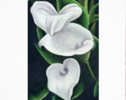 5x7 matted art print for an 8x10 frame, 3 White Calla Lily Flowers