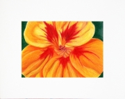 5x7 matted art print for an 8x10 frame, Orange Nasturtium Flower