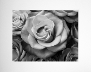Roses 8x10 Black & White Photo