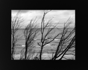 Lake Michigan Shore Line Trees at Little Sable Light House 8x10 Black & White photo